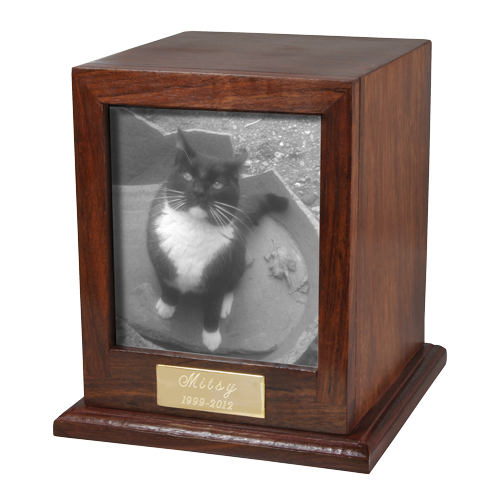 B&W photo of cat shown
