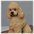 Wholesale Apricot Poodle with Sport Cut detail