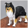 Border Collie with tricolor fur detail