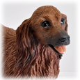 detail of Dachshund Red, Longhair dog figurine