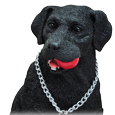 Wholesale Black Labrador Retriever detail