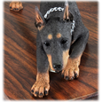 Wholesale Doberman Pinscher Red detail