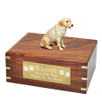Wholesale Labrador Retriever, Yellow wood urn with engraved plaque